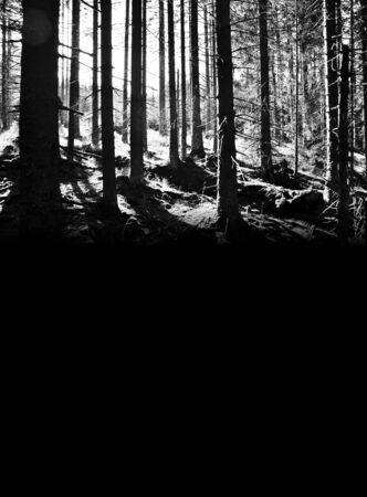 Dark, evening, forest at dusk, causing fear Stock Photo