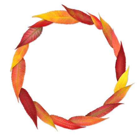 Simple circular frame from colored autumn leaves