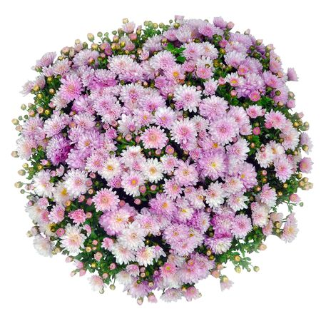 Top view of a pink and white bouquet on a white background Stock Photo