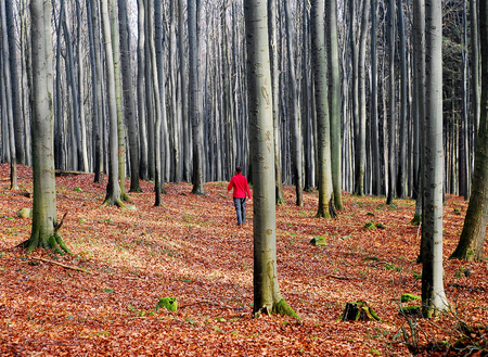 Sad abandoned and empty forest where a lone girl in a red jacket goes Reklamní fotografie - 124352480