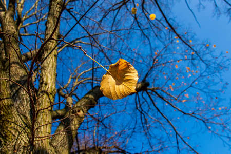 Autumn leaves on a branch under the blue sky