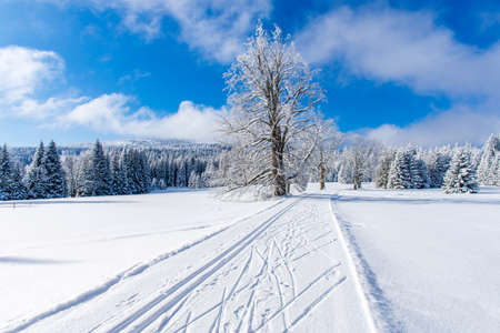 fresh track for cross-country skiing through the forest with lots of snow