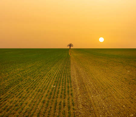 Arid landscape, fields drying up under the yellow sun