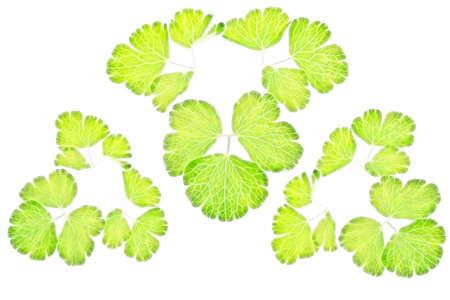 green leafs illustration background