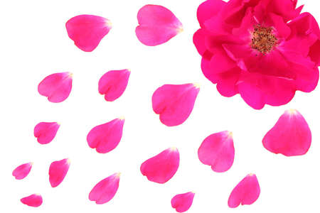 rose petals rain background