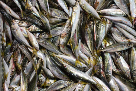 Fresh Fish Heap on Market Stall Resdy For Sale