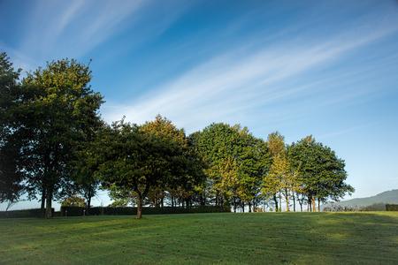 De bomen op een weide onder blauwe hemelen met pluizige wolken schoten vroeg in de ochtend Stockfoto