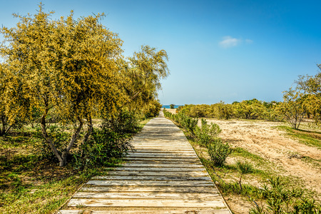 A wooden boardwalk leading to the beach between yellowish green foliage under blue skies with scattered clouds