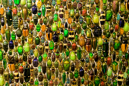 A colorful collection of beetles in Montreal insectarium