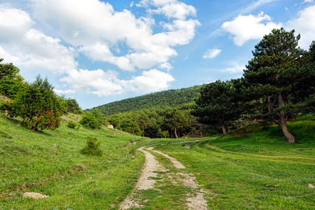 Dirt road leading into a forest under blue skies with fluffy white clouds