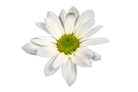 Closeup focus stacked shot of a white flower isolated on white background with clipping path