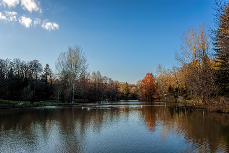 Collection of trees alongside a calm lake under blue skies with scattered clouds Reklamní fotografie