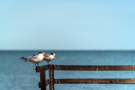Sea birds resting on a wooden pear with blue background copy space Reklamní fotografie