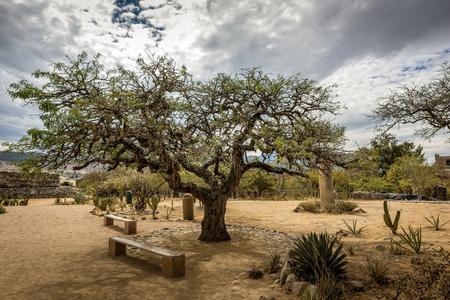 Beautiful tree in the garden of the archeological site of Mitla, Oaxaca, Mexico Reklamní fotografie