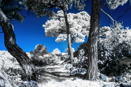 Infrared view of foilage and trees shot with 665 nanometer concerted dedicated camera 版權商用圖片 - 125588795