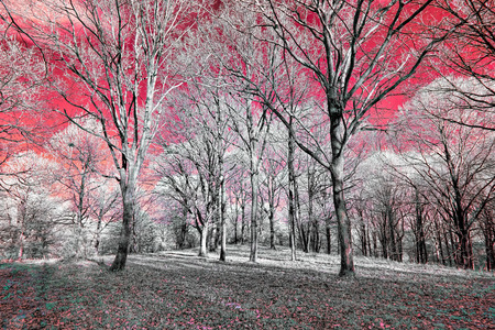 Infrared view of foilage and trees shot with 665 nanometer concerted dedicated camera