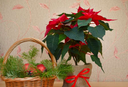 christmas basket with decorations and the poinsettia stock photo 69325111