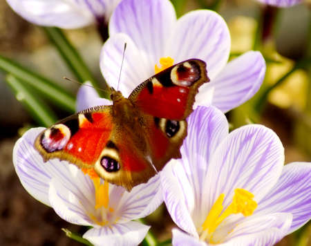 lovely butterfly on a spring meadow