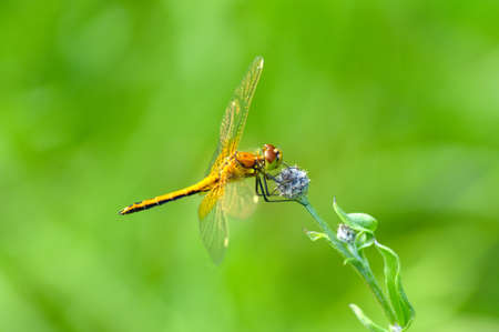 Beautiful dragonfly on summer flower macro Stock Photo