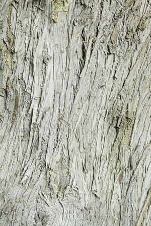 splintered: Wood splintered tree trunk, nature and outdoor