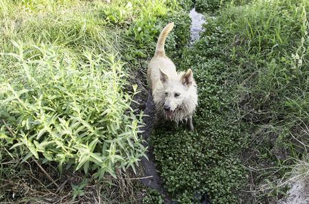 adoptive: Hound dog vegetation, hunting in river