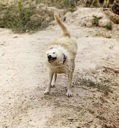 Shakin water dog countryside, animals Stock Photo