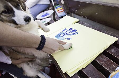 painted dog: Dog putting footprint painted on paper, animals
