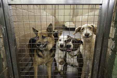 refuge: Locked kennel dogs abandoned, sadness Stock Photo