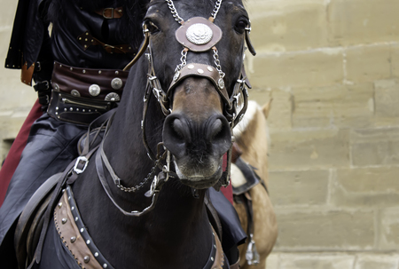 Horse medieval dress in show, animals and war Imagens