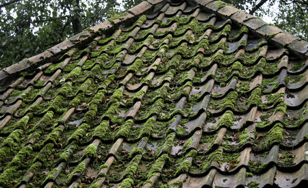 Roof with moss and vegetation, construction and architecture