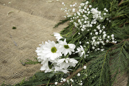 Natural white daisy in garden, snack and plants