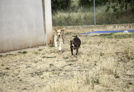 Dogs playing park, domestic animals and nature