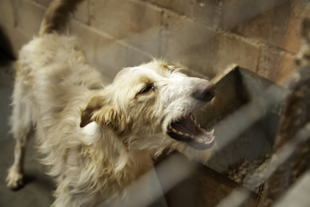 Dog in enclosed kennel, abandoned animals, abuse 免版税图像