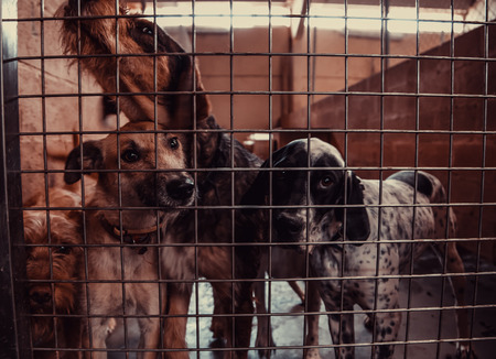 Dog in enclosed kennel, abandoned animals, abuse Foto de archivo