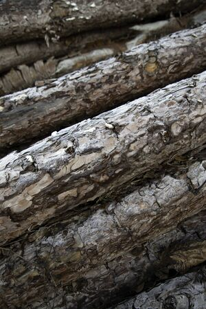 Stacked wood logs for firewood, nature and recycling Stock fotó