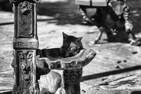 Street cats drinking in fountain, animals and abandonment Banque d'images
