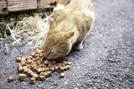 Cats abandoned on the street, animal abuse, loneliness