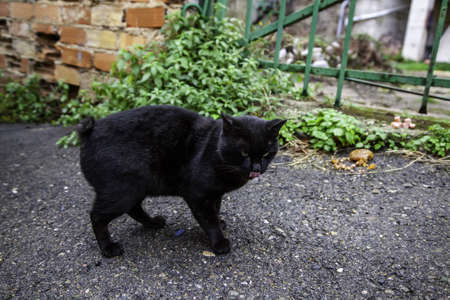 Black cat in urban street, domestic abandoned animals, pets
