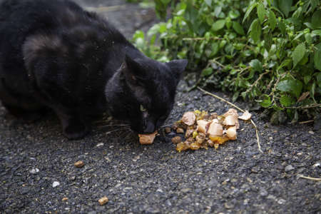 Stray cats eating in the street, detail of abandoned animals