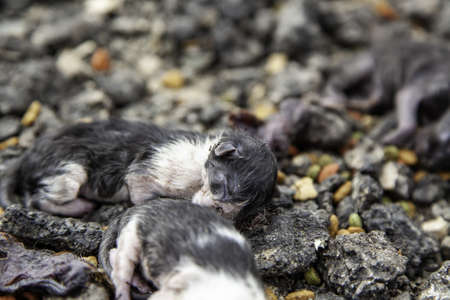 Dead puppy cats abandoned in the street, domestic animals