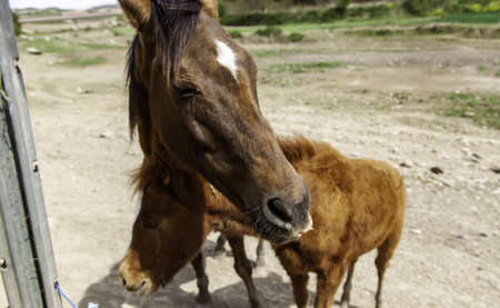 Funny horses in stable, wild mammals, equestrian