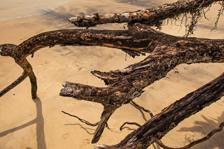 Close-up of twisted twigs buried in the sand of Paraty Mirim, a tropical beach near Paraty, an amazing and historic town on the coast of Rio de Janeiro State, southwestern Brazil.