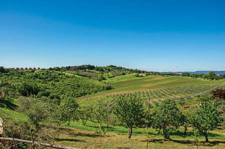Overview of olive trees and hills with villa at the top in the Tuscan countryside, an unbelievable and traditional region in the center of the Italian Peninsula. Located in the Tuscany region Stock Photo