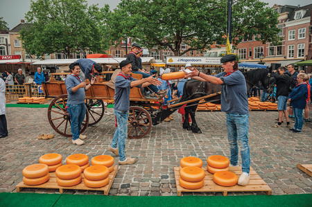 Young people carrying cart with cheese at the end of Market square fair in Gouda. Very popular day trip destination, is famous for its tasty Gouda cheese. Editorial