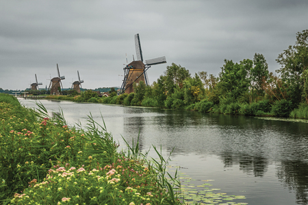 Straight channel with flowered bushes and windmills on the bank in a cloudy day at Kinderdijk. Situated in a polder, has the largest concentration of old windmills in the country. Southern Netherlands. Stock Photo