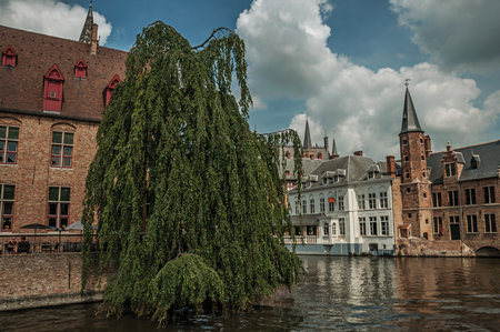 Leafy tree with old brick buildings on the canals edge in a sunny day at Bruges. With many canals and old buildings Stock Photo
