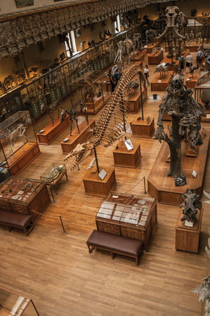 Paris, northern France - July 10, 2017. Prehistoric skeletons and fossils at the Gallery of Paleontology and Comparative Anatomy in Paris. Known as one of the world's most impressive cultural centers.
