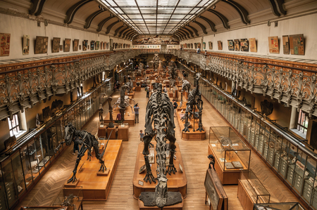 Paris, northern France - July 10, 2017. Prehistoric skeletons and fossils at the Gallery of Paleontology and Comparative Anatomy in Paris. Known as one of the worlds most impressive cultural centers.