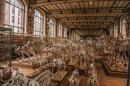 Paris, northern France - July 10, 2017. Skeletons of animals in the huge hall in the Gallery of Paleontology and Comparative Anatomy at Paris. Known as one of the world's most impressive cultural centers. Editoriali