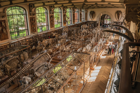 Paris, northern France - July 10, 2017. Skeletons of animals and visitors in the Gallery of Paleontology and Comparative Anatomy at Paris. Known as one of the world's most impressive cultural centers.